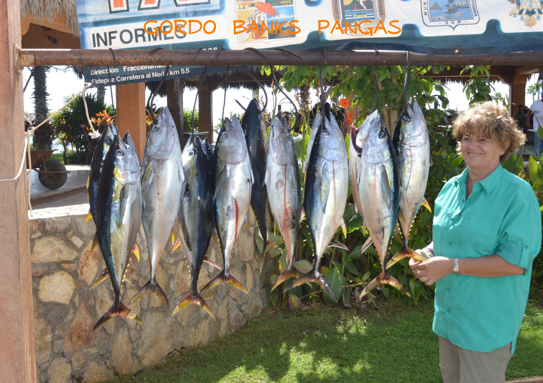826 tunacatch for Los cabos fishing