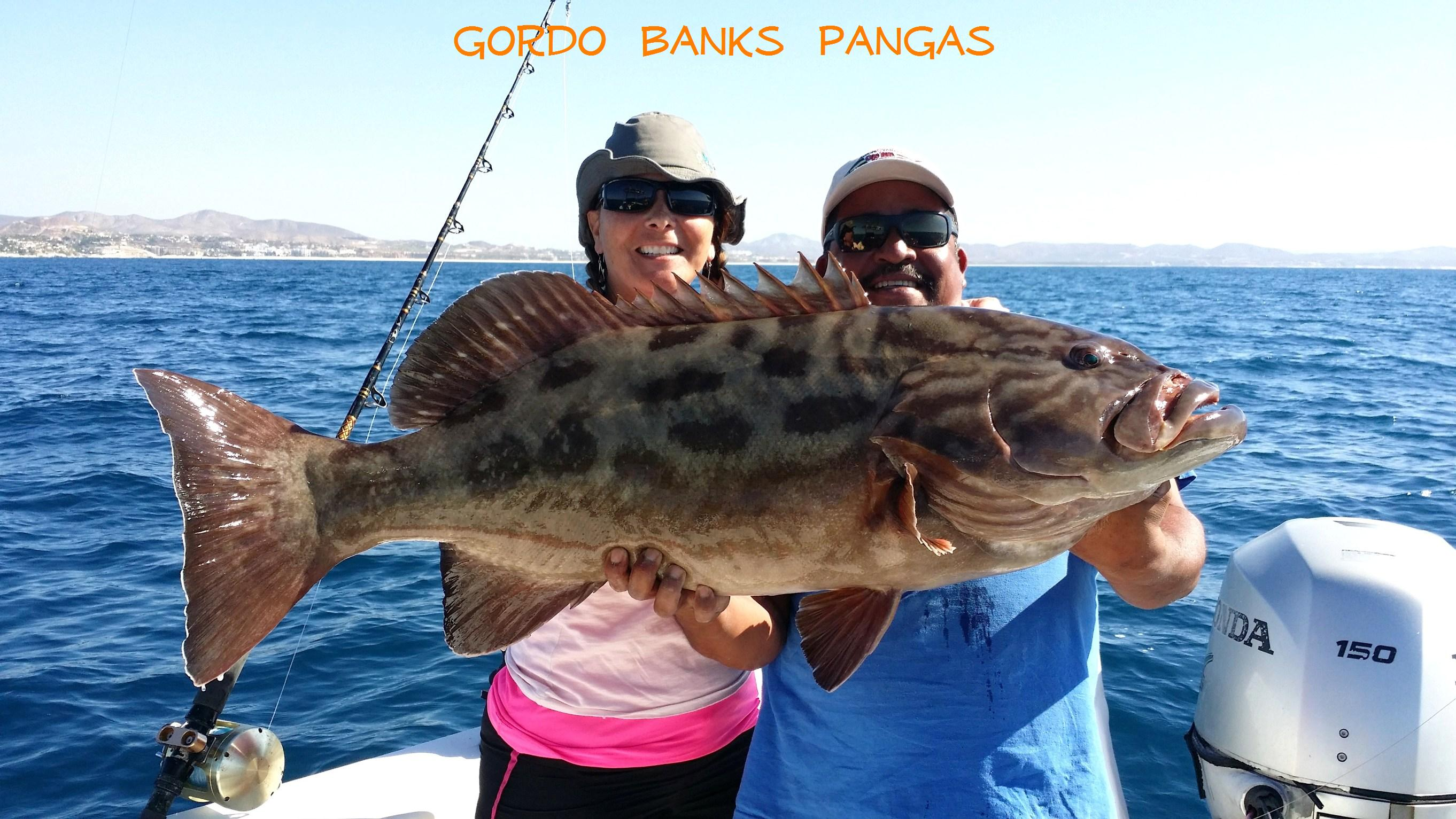 204 grouper for Cabo san lucas fishing report