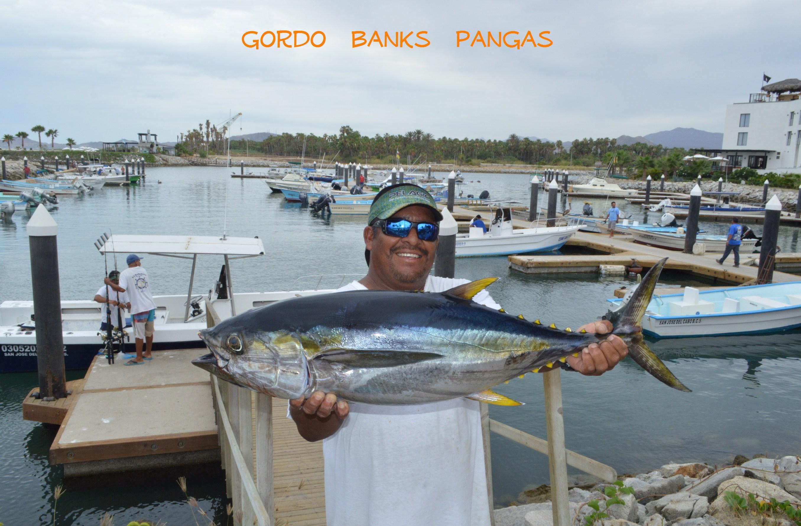 203 jesustuna for Cabo fishing seasons