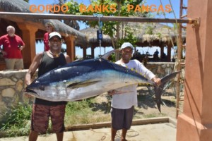 Los cabos fishing report 8 23 2015 cabo san lucas blog for San jose del cabo fishing report